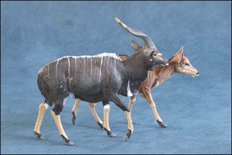 Ana's Nyala: a small walkaround by Kikimalou Mountain_Nyala_DOBROWOSLKA-17.jpg_original