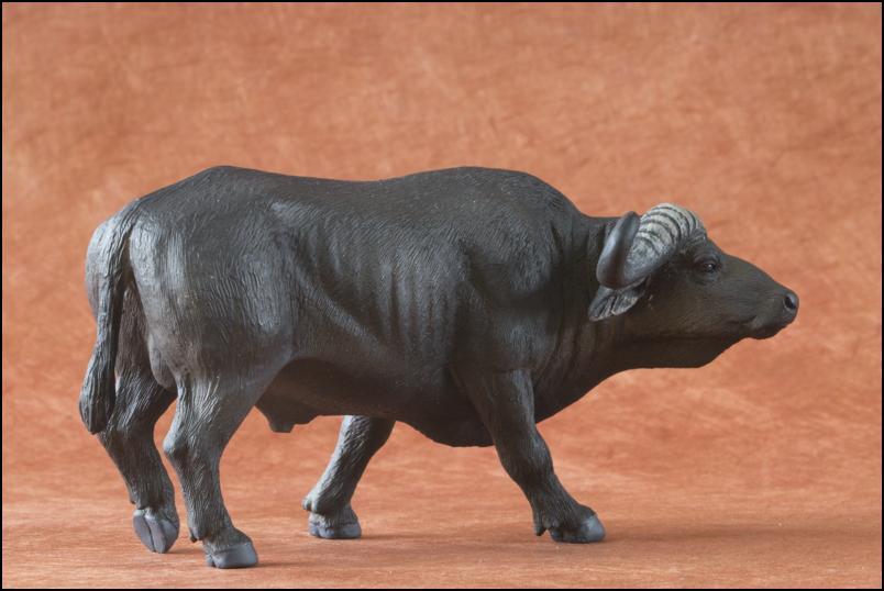 Kikimalou's 2012 MÖJO FUN cape buffalo walkaround Cape_Buffalo_Mojo_Fun-5