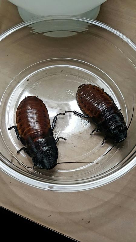 Loops Roaches - Combined species journal 20170305_233059