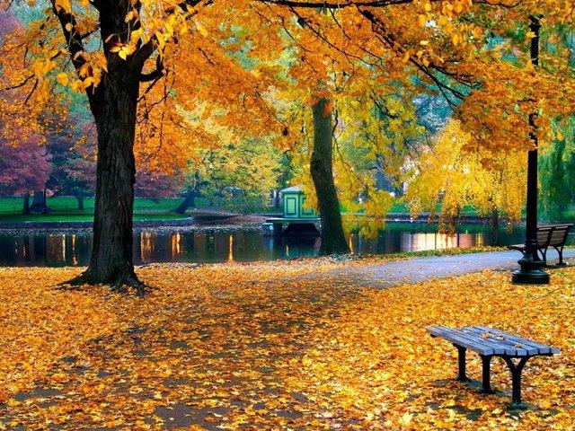 klupa nekoga čeka - Page 2 Nature_tree_park_maple_tree_leaves_autumn_landsc