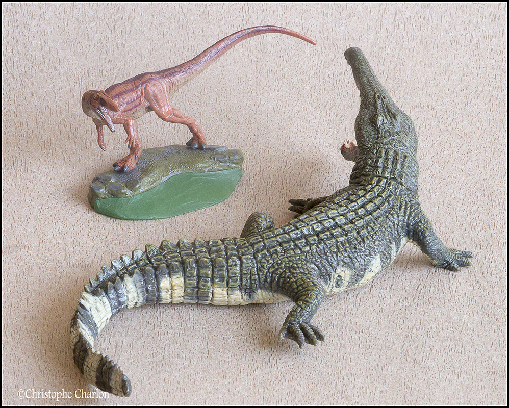 "Kinto Favorite ""Redondasaurus vs Coelophysis"" set walkaround by Kikimalou Kinto_favorite_Fukui_Museum_Redondasaurus_vs_Coe"
