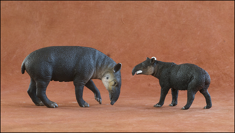Ana's mountain tapir : A walkaround by Kikimalou Mountaintapir_DOBROWOSLKA-17.jpg_original