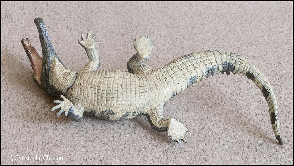 "Kinto Favorite ""Redondasaurus vs Coelophysis"" set walkaround by Kikimalou Kinto_favorite_Fukui_Museum_Redondasaurus_6"