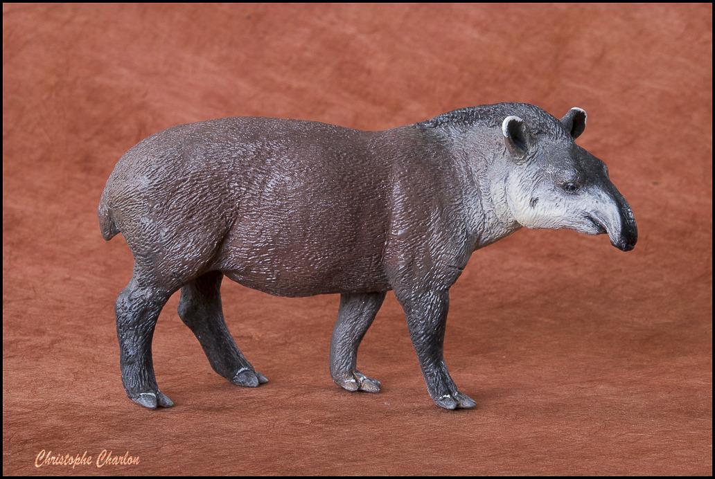 Mojo 387178 Brazilian Tapir: A walkaround by Kikimalou Annas_Brazilian_tapir.jpg_original