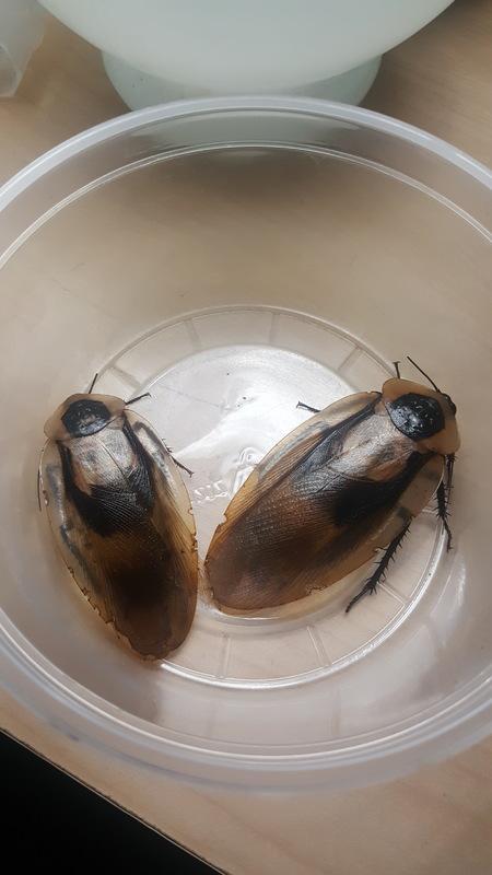 Loops Roaches - Combined species journal 20170305_230442