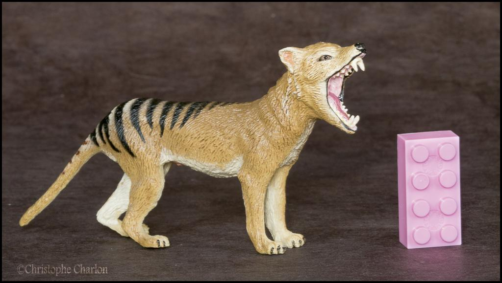 Southlands Replicas Thylacine (the toy) walkaround by Kikimalou Southlands_Replicas_00000_Thylacine_male_1