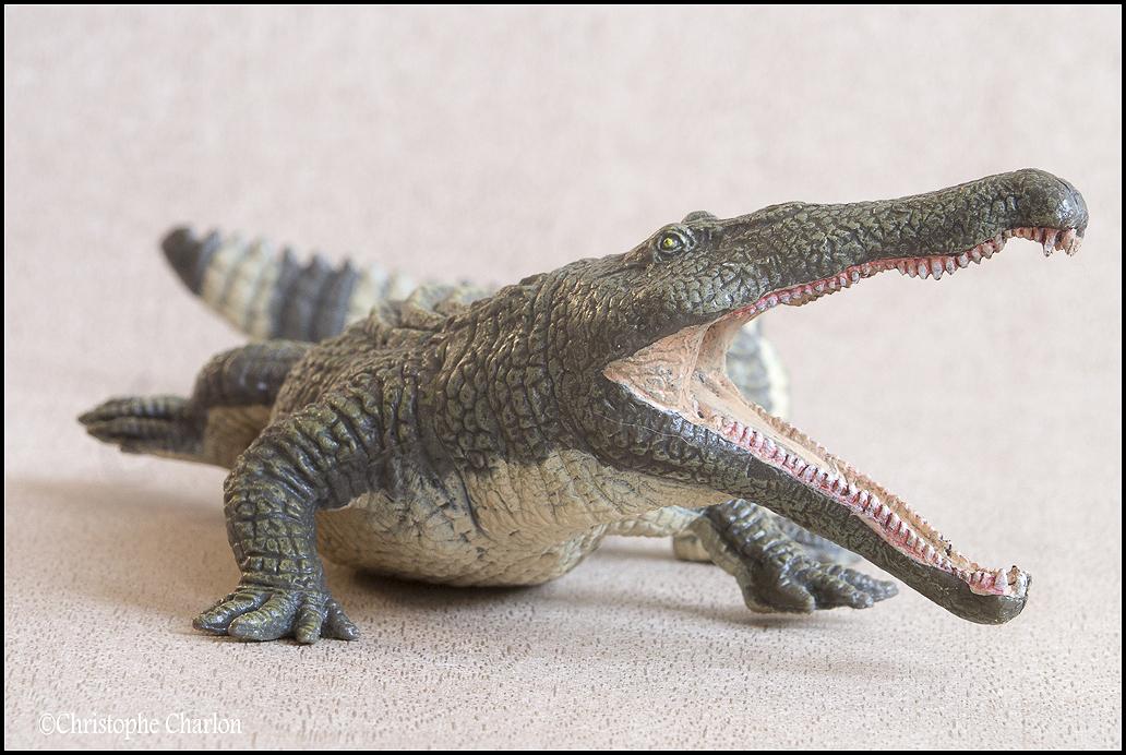 "Kinto Favorite ""Redondasaurus vs Coelophysis"" set walkaround by Kikimalou Kinto_favorite_Fukui_Museum_Redondasaurus_8"