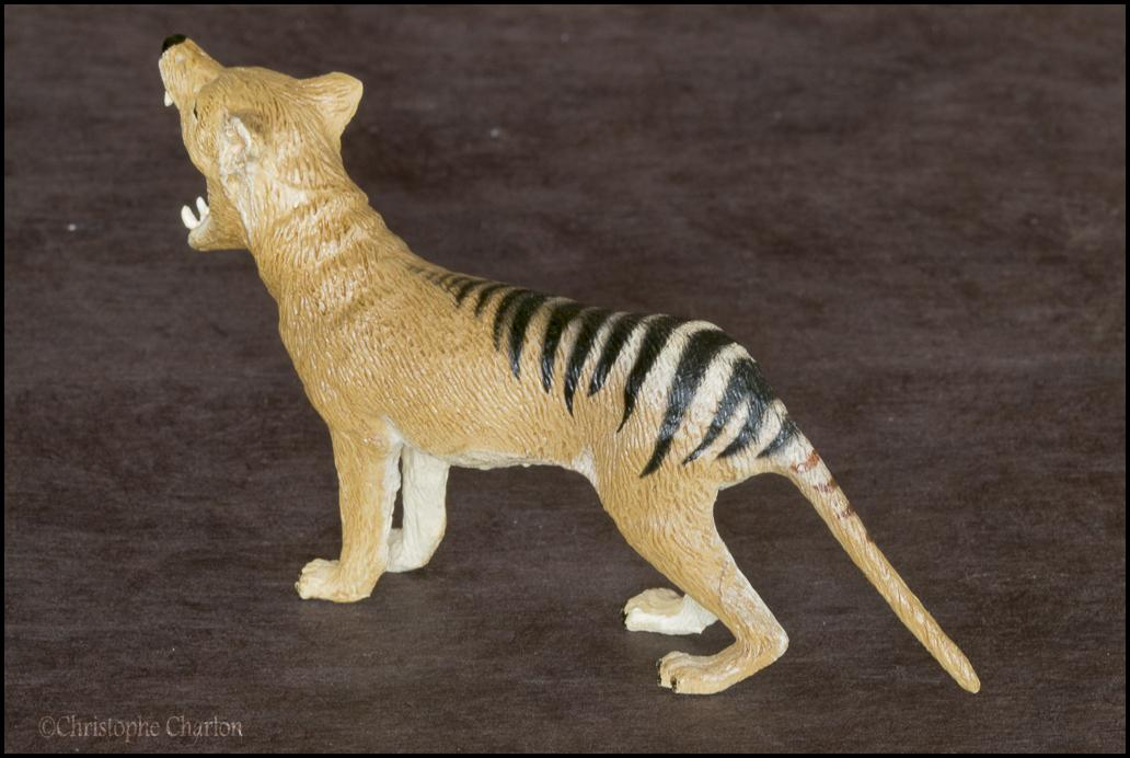 Southlands Replicas Thylacine (the toy) walkaround by Kikimalou Southlands_Replicas_00000_Thylacine_male_13.jpg