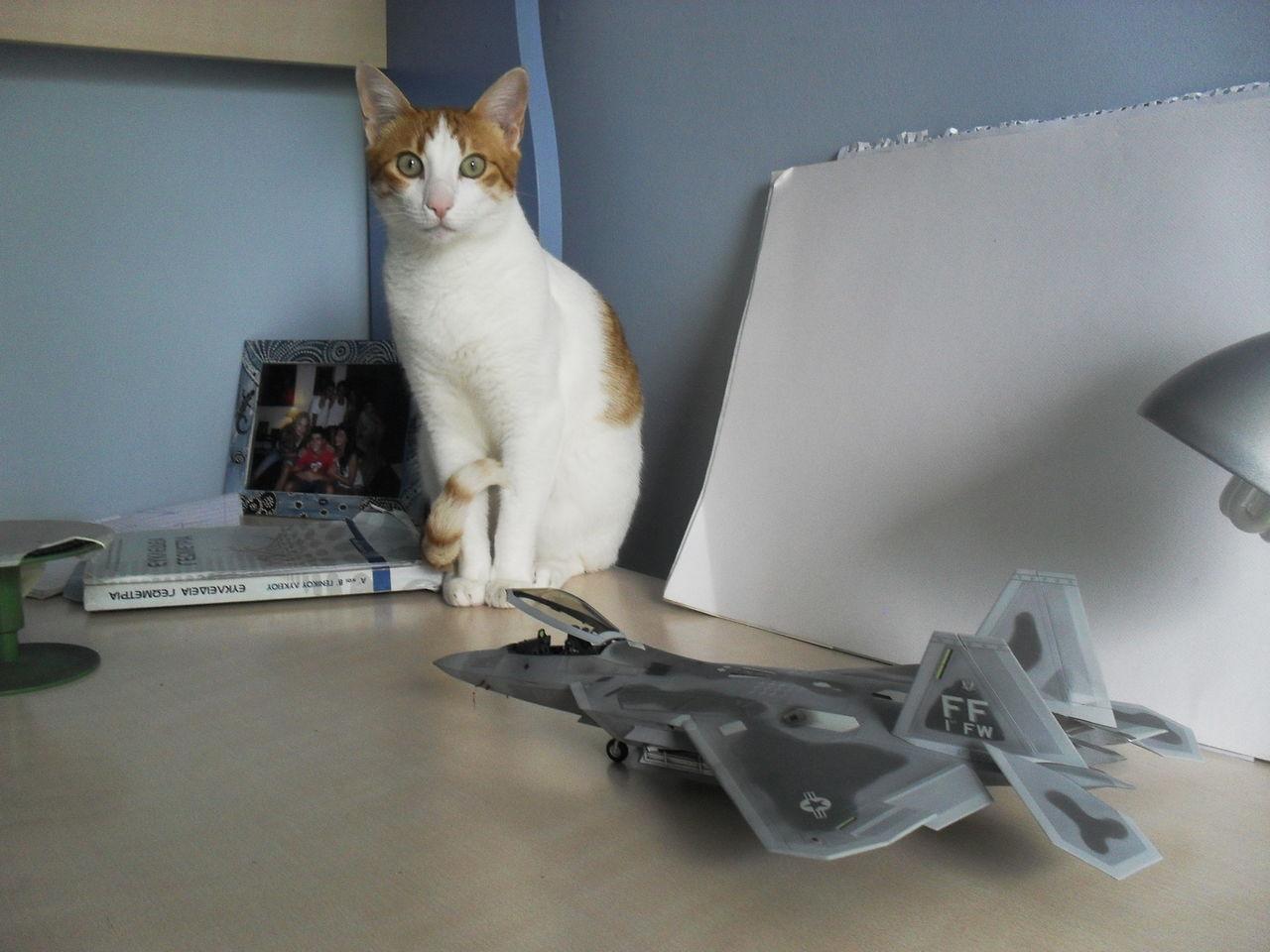 "F/A-22A  1/48  Hasegawa...""σε οσους αρεσουμε, για τους αλλους δεν θα μπορεσουμε!!!"" SDC13380"