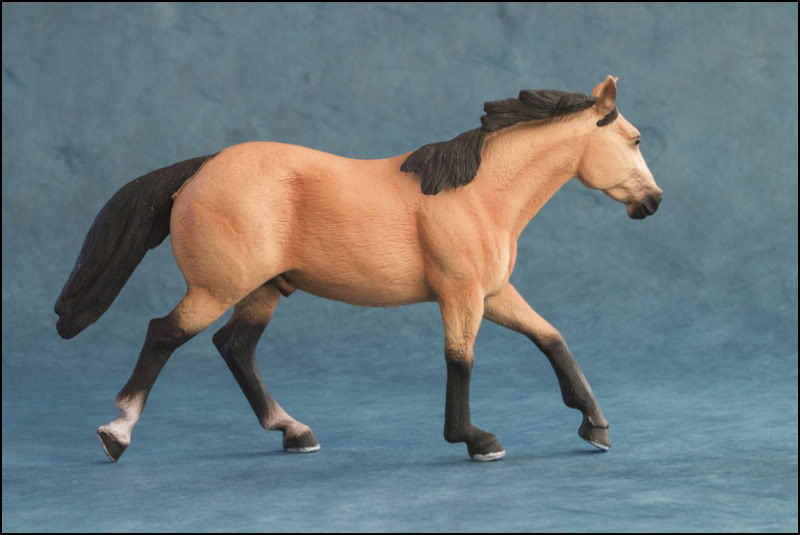 The MOJO FUN 2012 Buckskin Quarter horse walkaround by Kikimalou Buckskin_Quarter_horse_6
