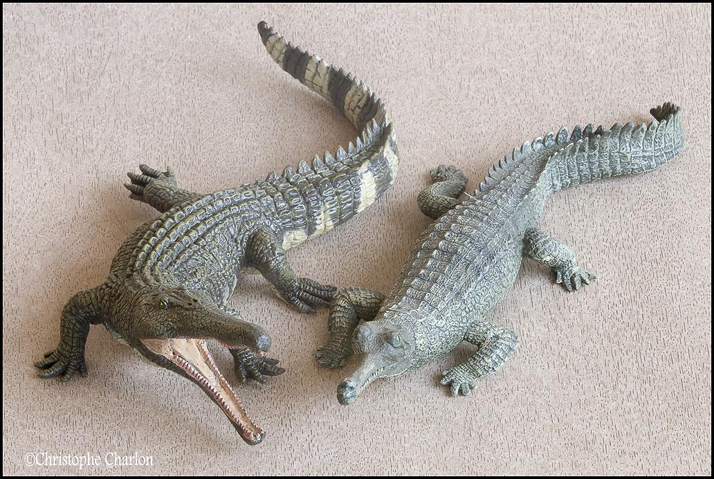"Kinto Favorite ""Redondasaurus vs Coelophysis"" set walkaround by Kikimalou Kinto_favorite_Fukui_Museum_Redondasaurus_12"