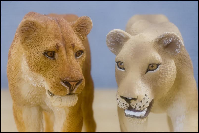 MOJO : The lions family walkaround review by Kikimalou Mojo_lions_1_15