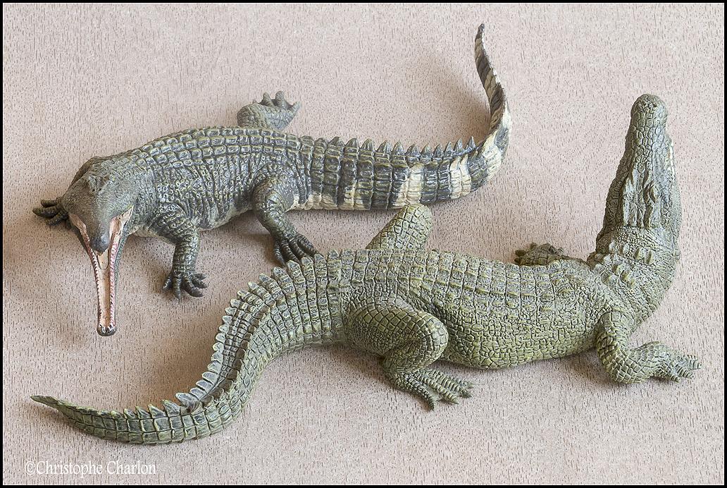 "Kinto Favorite ""Redondasaurus vs Coelophysis"" set walkaround by Kikimalou Kinto_favorite_Fukui_Museum_Redondasaurus_13"