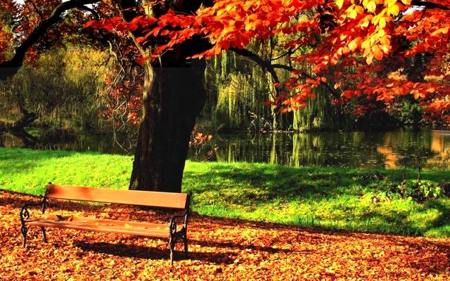 klupa nekoga čeka - Page 4 6925041_autumn_park_bench_21517