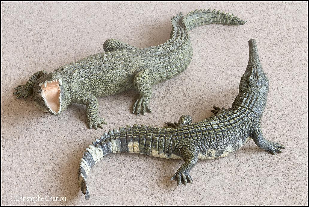 "Kinto Favorite ""Redondasaurus vs Coelophysis"" set walkaround by Kikimalou Kinto_favorite_Fukui_Museum_Redondasaurus_14"