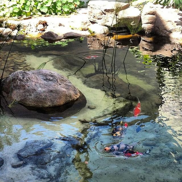 10 lindos lagos Ornamentais 1_lago_ornamental_construido_na_nova_sede_da_bio