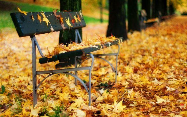 klupa nekoga čeka - Page 4 Park_autumn_bench_2560x1600_31270