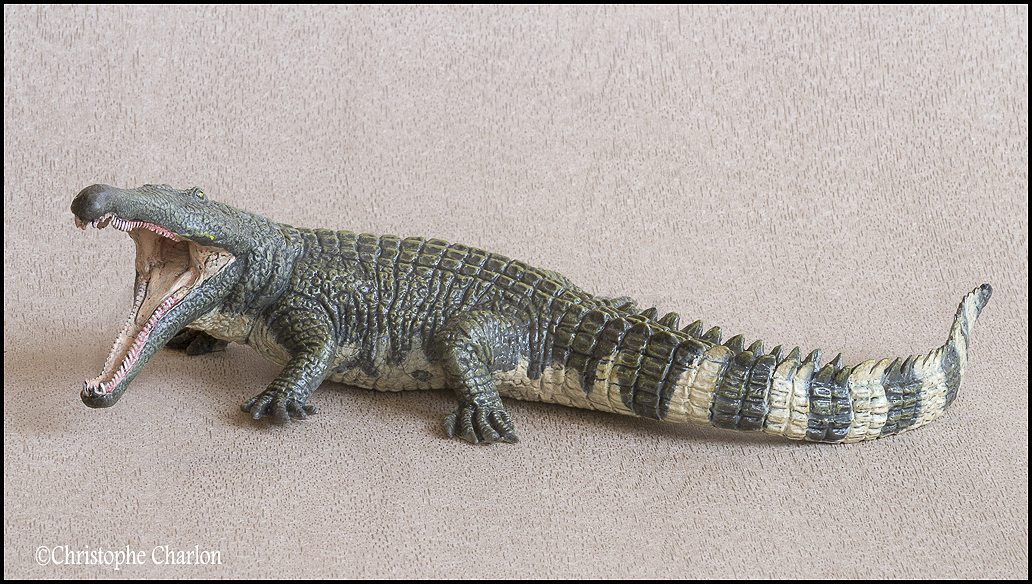 "Kinto Favorite ""Redondasaurus vs Coelophysis"" set walkaround by Kikimalou Kinto_favorite_Fukui_Museum_Redondasaurus_4"