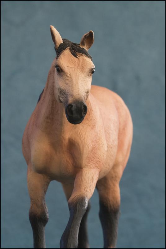The MOJO FUN 2012 Buckskin Quarter horse walkaround by Kikimalou Buckskin_Quarter_horse_13