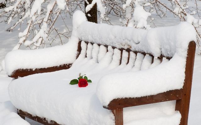 klupa nekoga čeka - Page 4 7008846_rose_bench_winter