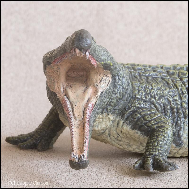 "Kinto Favorite ""Redondasaurus vs Coelophysis"" set walkaround by Kikimalou Kinto_favorite_Fukui_Museum_Redondasaurus_9"