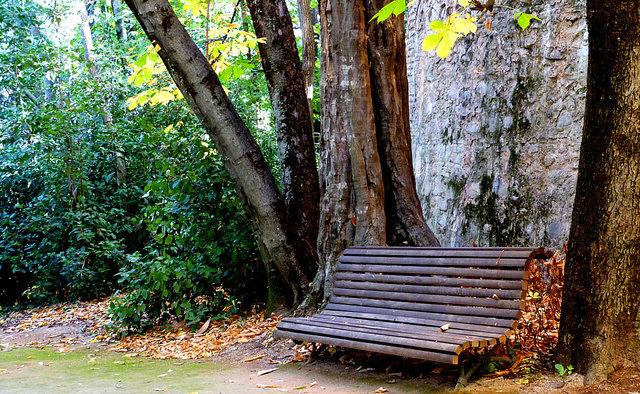 klupa nekoga čeka - Page 2 Un_banco_de_madera_parque