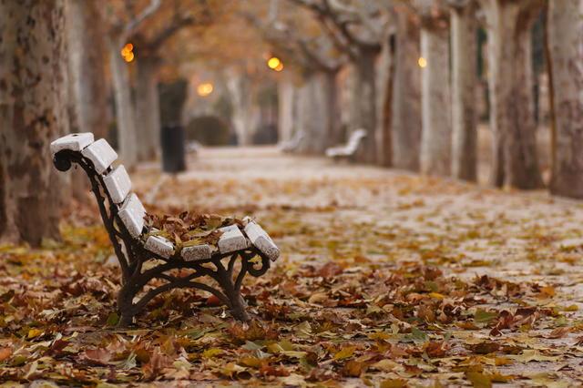 klupa nekoga čeka - Page 4 Autumn_Park_Bench_Fallen_Leaves_Desktop_Wallpape