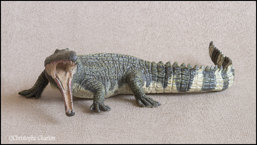 "Kinto Favorite ""Redondasaurus vs Coelophysis"" set walkaround by Kikimalou Kinto_favorite_Fukui_Museum_Redondasaurus_5"
