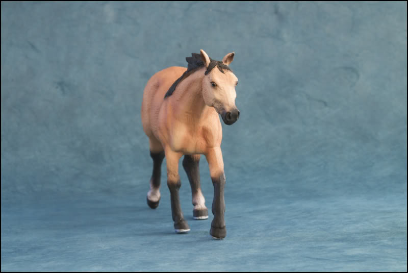 The MOJO FUN 2012 Buckskin Quarter horse walkaround by Kikimalou Buckskin_Quarter_horse_4