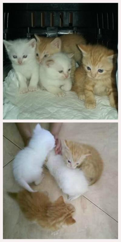 ¡¡¡ADOPTADOS!!! Gatitos de 1 Mes. Foro1