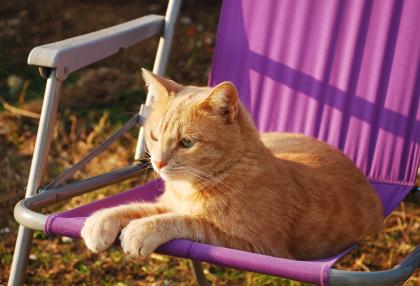 osećaj u slici,tonu,stihu... Cat_orange_pink