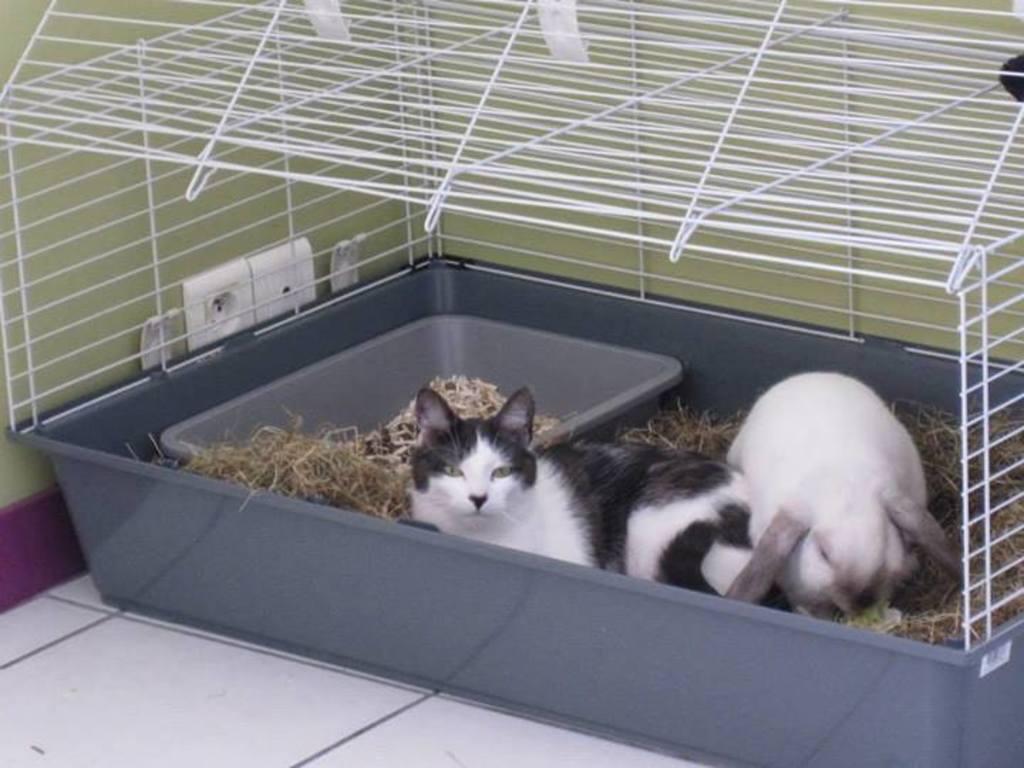 juanita galga mature à l'adoption   Adoptée - Page 5 1470228_1434327793456977_934743038_n