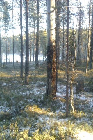 Зимний пейзаж IMAG0641