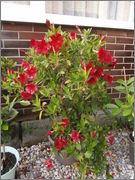 Léto na zahradě P7111403