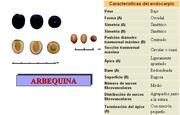 ¿Alguien me puede ayudar a identificar qué tipo de olivos tengo? Arbequina
