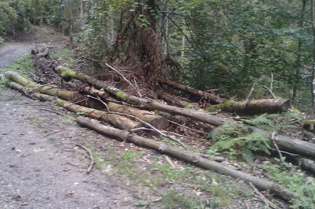 Listopadne šume IMAG1112