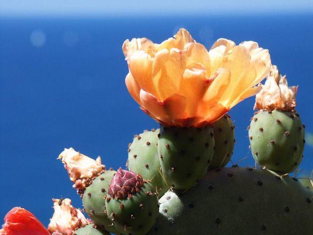Kaktusi - Page 2 1aaaaaaaaaa
