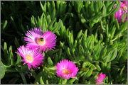 Určení druhu rostliny - Stránka 4 P5101809_5
