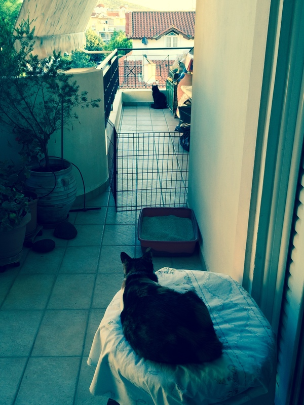 Κάρι, μια υπέροχη γατούλα και τα 4 μωράκια της - Σελίδα 9 Milou_Kira_1
