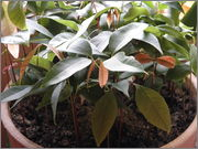 Určení druhu rostliny P4040105
