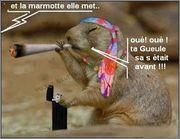 Je suis fatiguée - Page 2 Marmotte