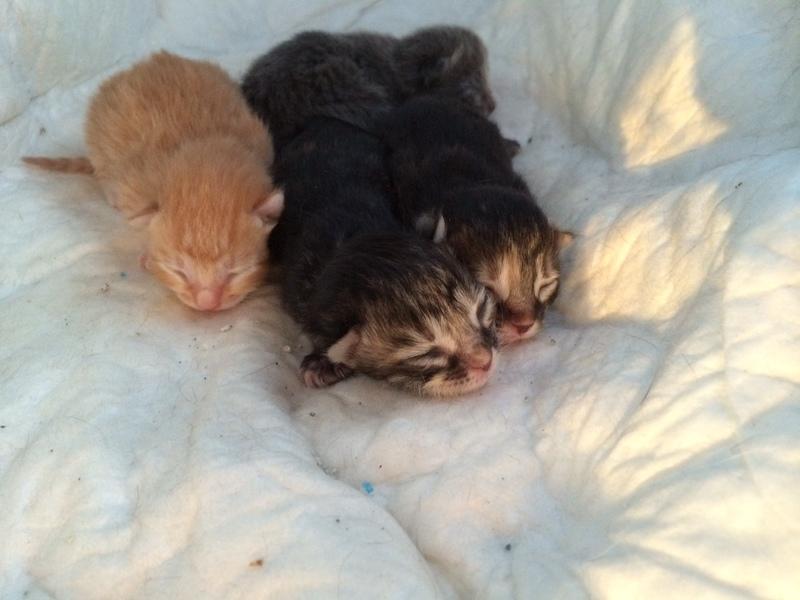 Κάρι, μια υπέροχη γατούλα και τα 4 μωράκια της Image
