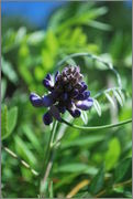 Léto na zahradě - Stránka 2 DSC_0007