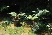 Léto na zahradě DSC_0119