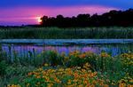 Clearlake Wetland