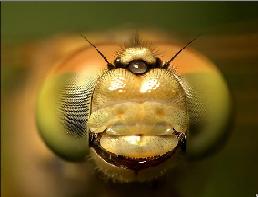 Aquarismo: Como as regras basicas de fotografia podem nos ajudar??? Sem_t_tulo1