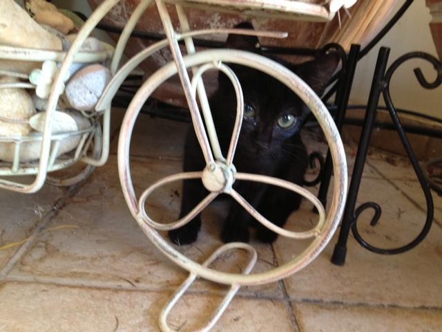 Πανθηράκος 2,5 μηνών αναζητάει την οικογένειά του Image