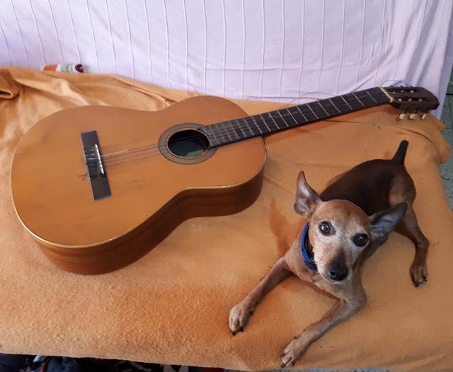 Flamencos y Pelicanos - Página 4 Guitarra
