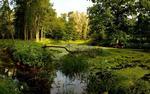 Maplehurst Marsh