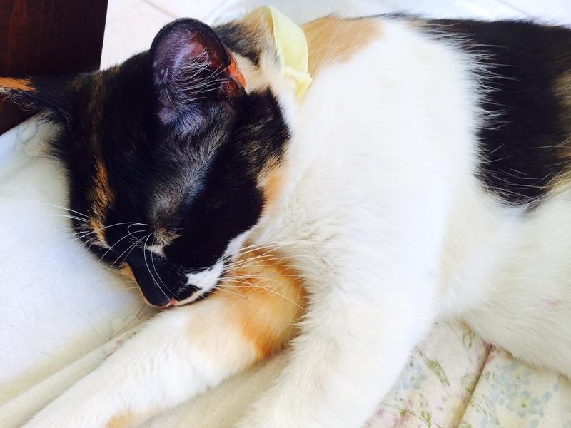 Κάρι, μια υπέροχη γατούλα και τα 4 μωράκια της - Σελίδα 6 Milou_6